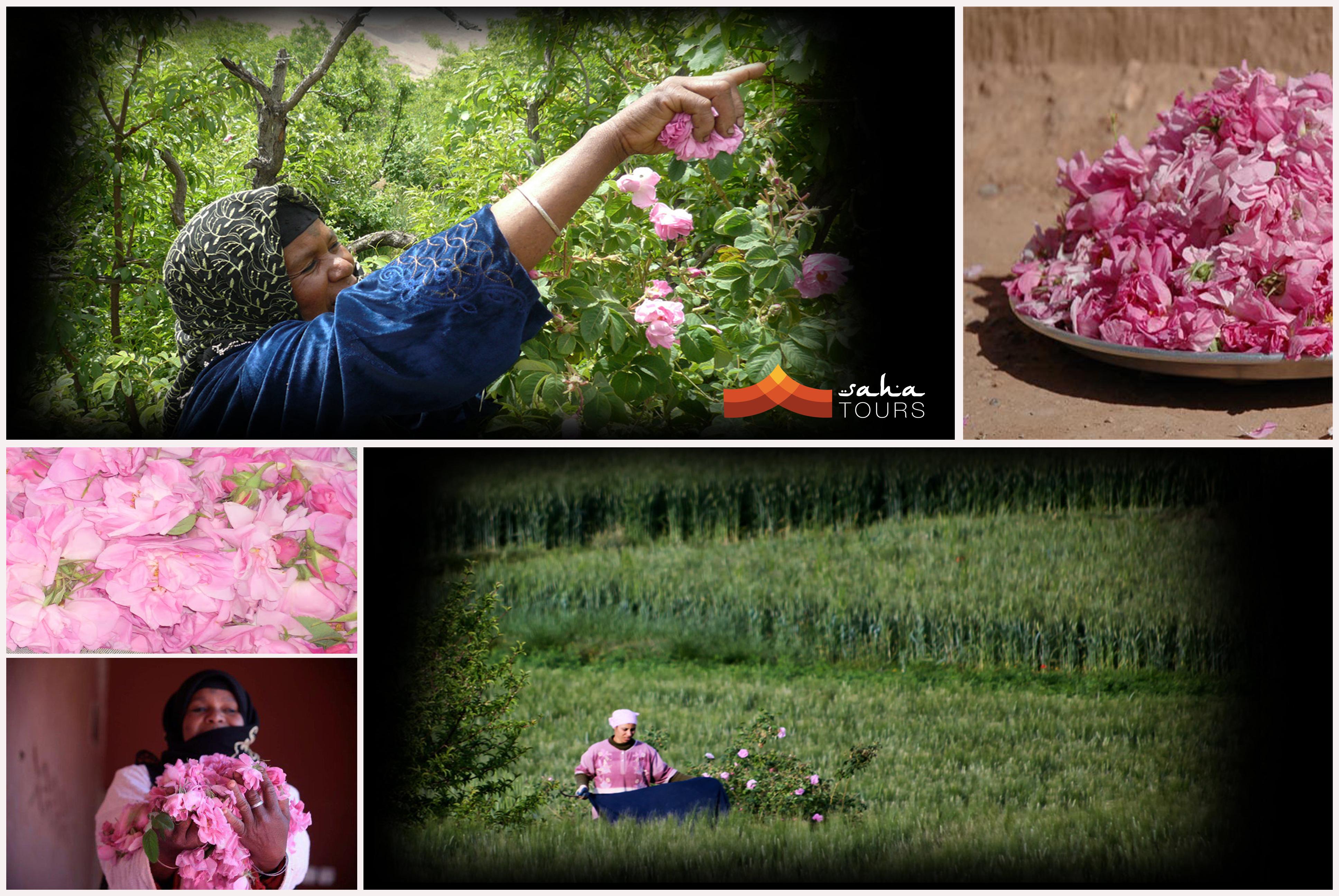 El Valle de las Rosas 1